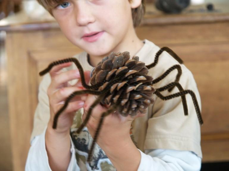 Самые интересные поделки из шишек своими руками: обработка сосновых и еловых шишек, процесс изготовления