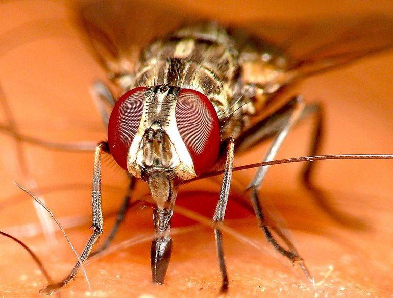 Почему кусаются мухи в конце лета и осенью: разновидности двукрылых и признаки поражения ими у человека