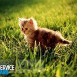 Как отмыть кошачью мочу
