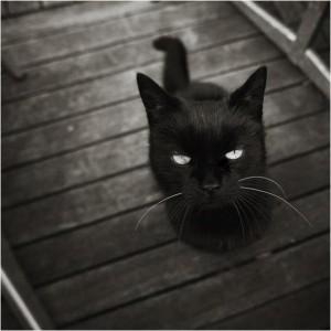 Как усыпить кота в домашних условиях