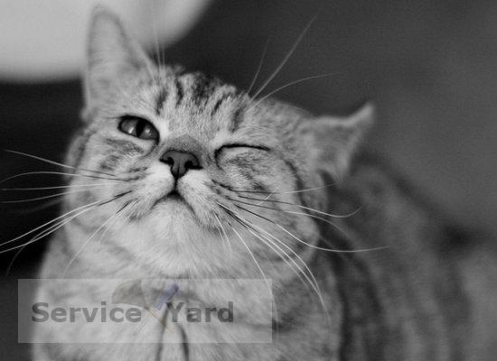 Как помыть кота в домашних условиях видео