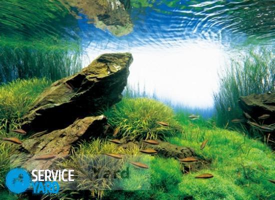 Как убрать запах из аквариума