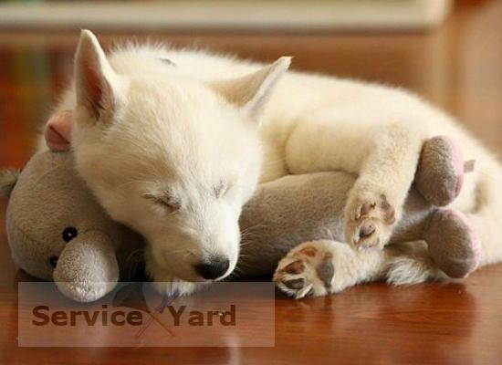 Как убрать запах собаки в квартире