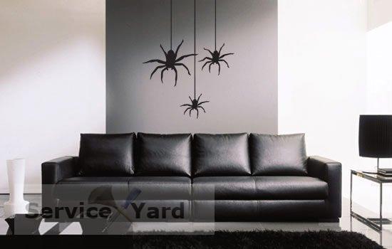 Черные пауки в доме - фото