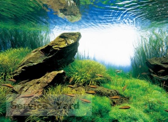 Черная плесень в аквариуме - как бороться