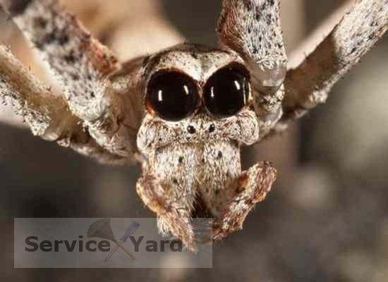 К чему пауки в доме?