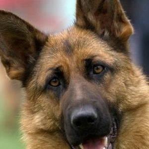 Как избавиться от запаха мочи собаки?