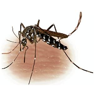 Средство от комаров в домашних условиях 🥝 как вывести комаров из квартиры