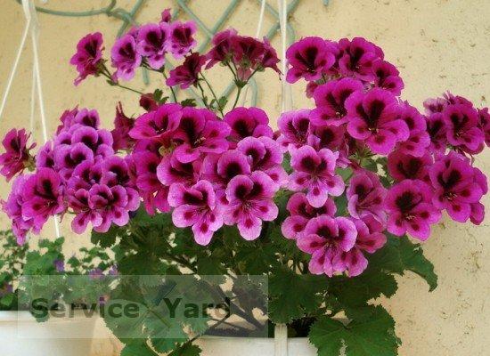 Как избавиться от тли на комнатных цветах