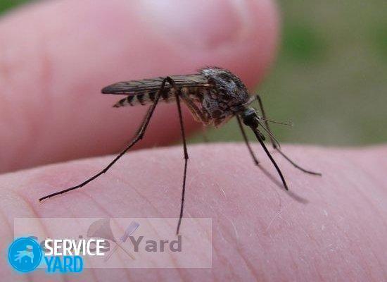 Средство от комаров в домашних условиях �� как вывести комаров из квартиры