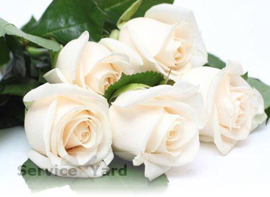 Как сохранить розы в вазе дольше всего?