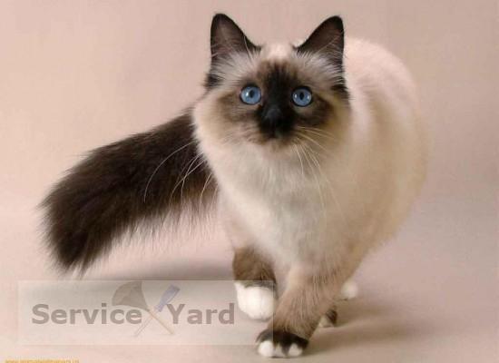 Как избавиться от запаха кошачьей мочи? Уборка в квартире
