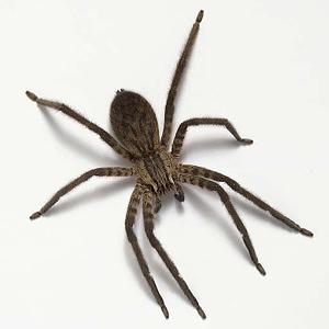 Почему нельзя убивать паука в доме?