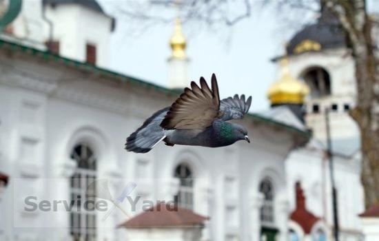 Отпугиватель голубей