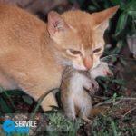 Как поймать мышь?