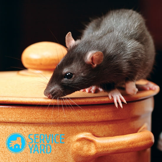 watermarked - Rodent-on-canister jpg