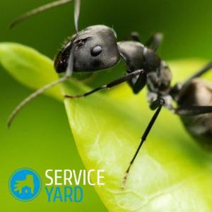 Как избавиться от муравьев в доме навсегда 🥝 как бороться, травить и уничтожить дома