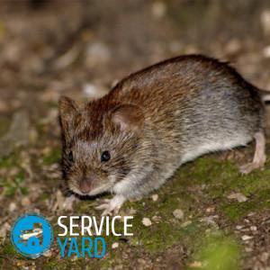 Избавиться от мышей в квартире 🥝 чем вывести дома, как отпугивать