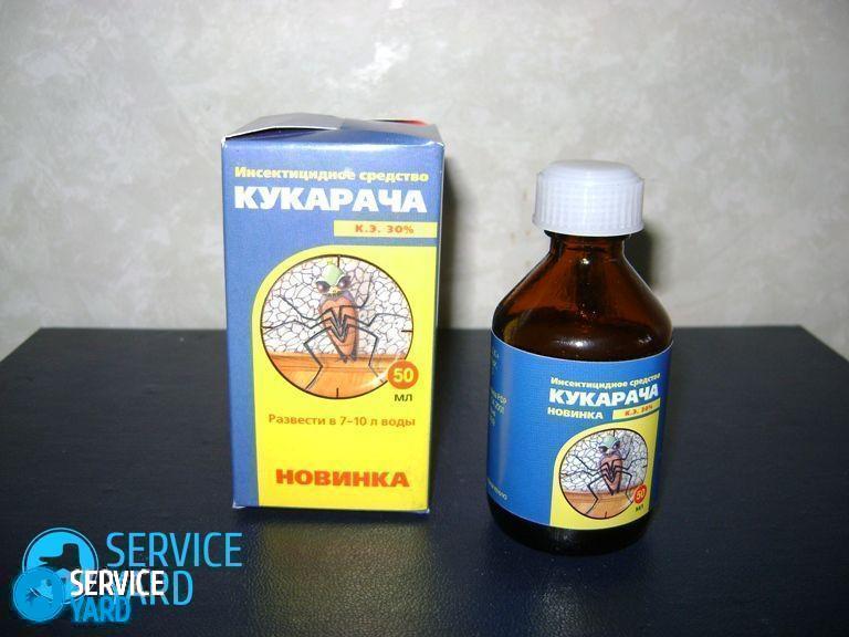 watermarked - kak-ispolzovat-kukaracha-v-borbe-protiv-klopov-2