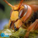 Рыжие муравьи — чем вывести?