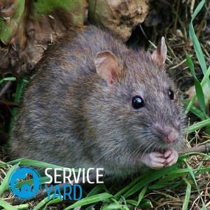 Отрава для крыс
