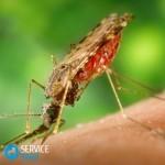 Средство от комаров спрей