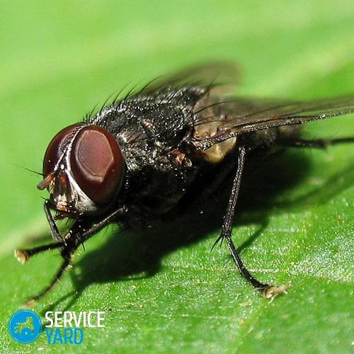 Уничтожение мух, ServiceYard-уют вашего дома в Ваших руках