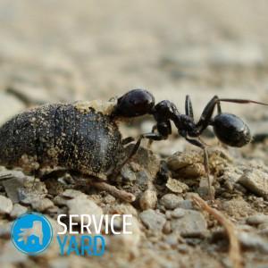 Как избавиться от муравьев в бане?