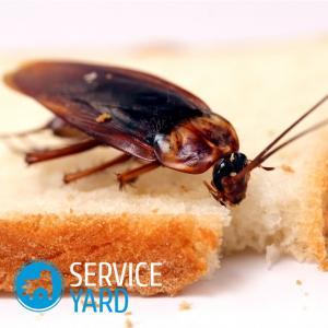Средство от тараканов и клопов