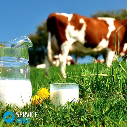 Как кипятить молоко чтобы получать от него пользу?