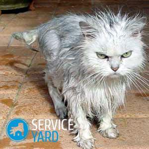 Как мыть кота 🥝 в домашних условиях
