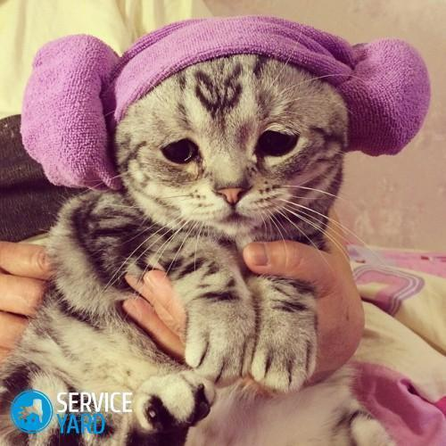 Как избавиться от запаха кошачьей мочи в квартире? Уборка в квартире