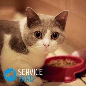 Как избавиться от шерсти кота 🥝 или кошки в доме