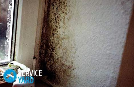 Как бороться с плесенью на стенах в квартире?