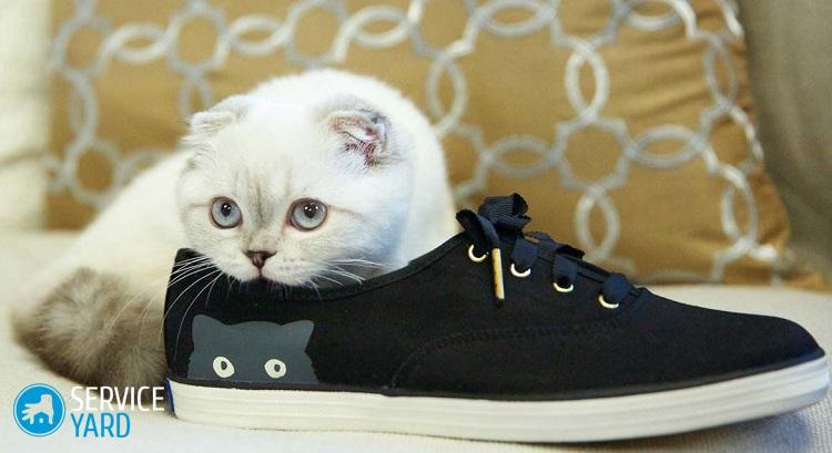 Как избавиться от запаха кошачьей мочи от обуви