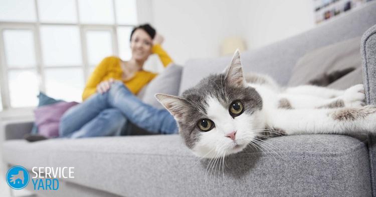 Как избавиться от запаха на диване от мочи?