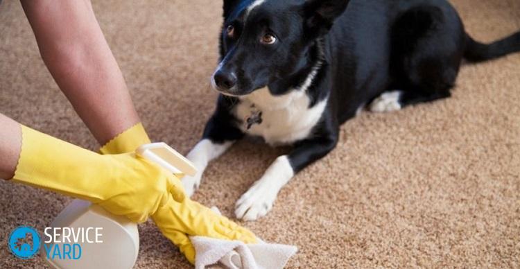 Как избавиться от запаха на ковре от мочи