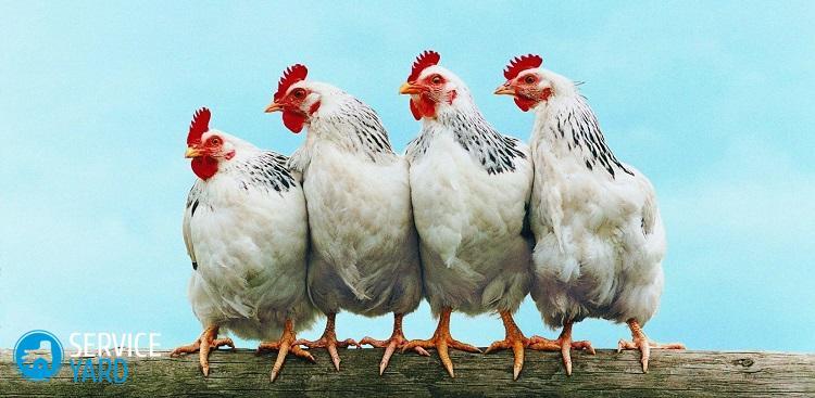 Как отстирать птичий помет с одежды