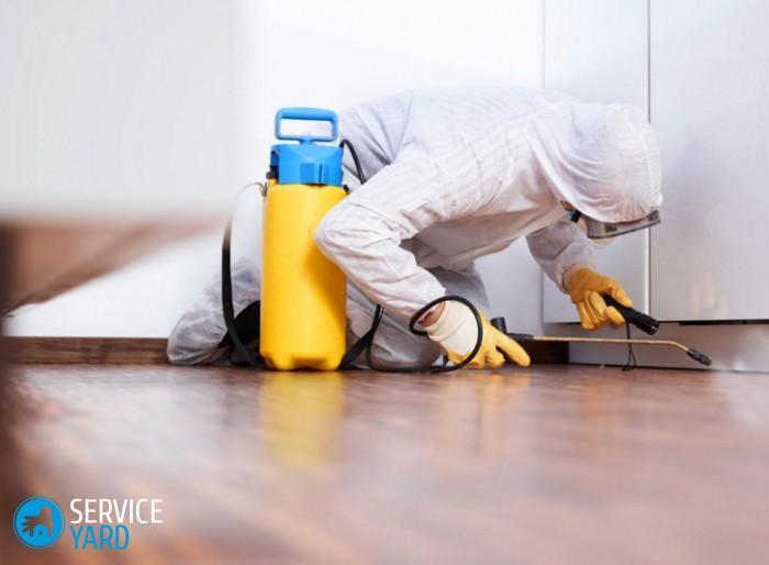 Как избавиться от прусаков раз и навсегда в домашних условиях