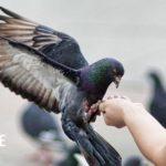 Как отстирать птичий помет с одежды?