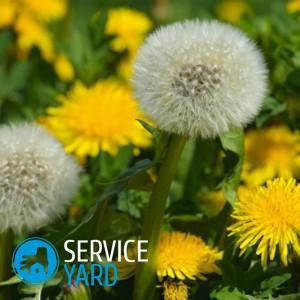 Как отстирать одуванчик с одежды, ServiceYard-уют вашего дома в Ваших руках