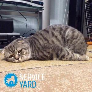 Чем вывести запах кошачьей мочи с обуви 🥝 как отстирать
