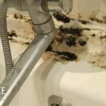 Плесень в ванной на швах плитки — как избавиться?