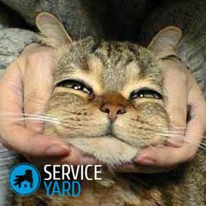 Что сделать, чтобы кот не драл обои?