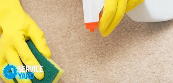 Чем почистить палас в домашних условиях от грязи и запаха? Уборка в квартире
