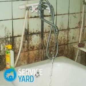 Грибок в ванной комнате — как удалить?