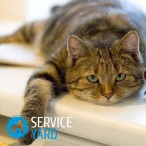 Как очистить плед от кошачьей шерсти?