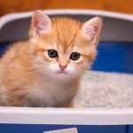 Как очистить кошачий лоток от мочевого камня?