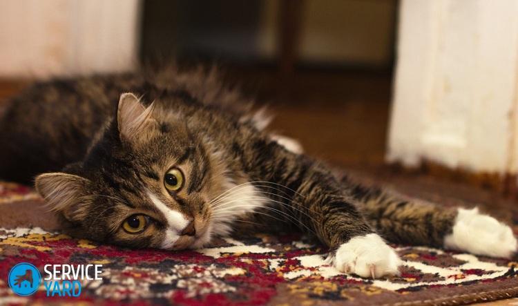 Убрать запах кота с паласа