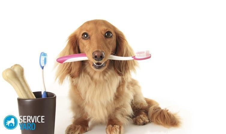 Как почистить собаке зубы в домашних условиях?